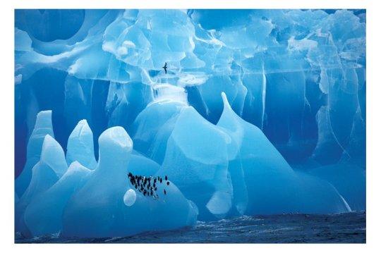 antarctic-wonderland