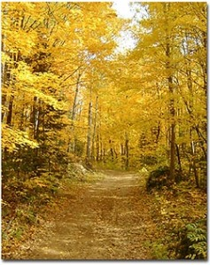 ontario-fall-colors-hiking-trails