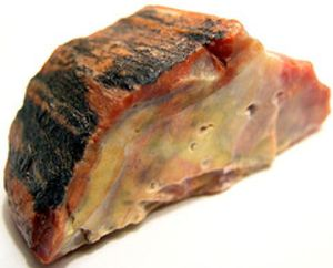 petrified-wood