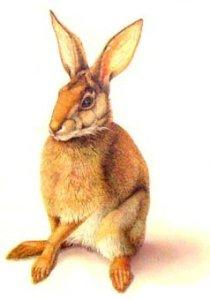 rabbit_jpg