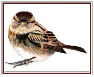 sparrow_fr