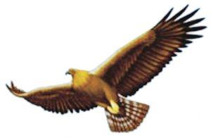 goldeneagle4