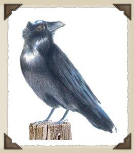 raven_ac_small1